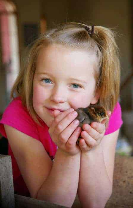 Audrey and baby chick